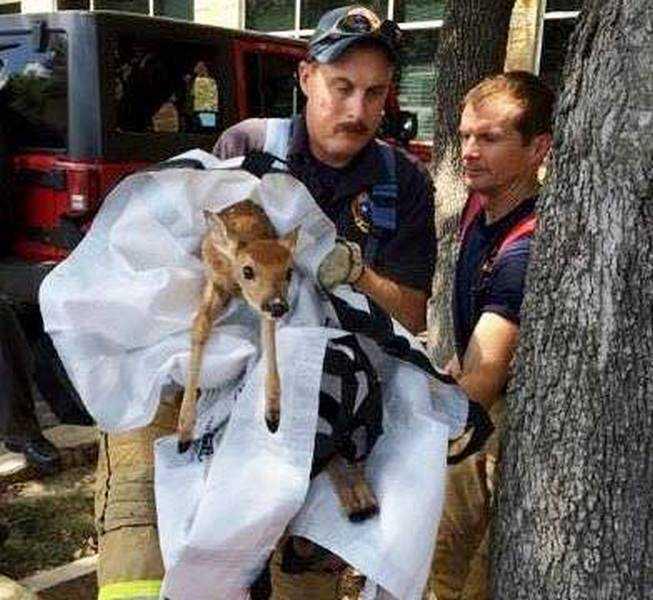 18 kép tűzoltókról akik állatok életét mentik meg 5
