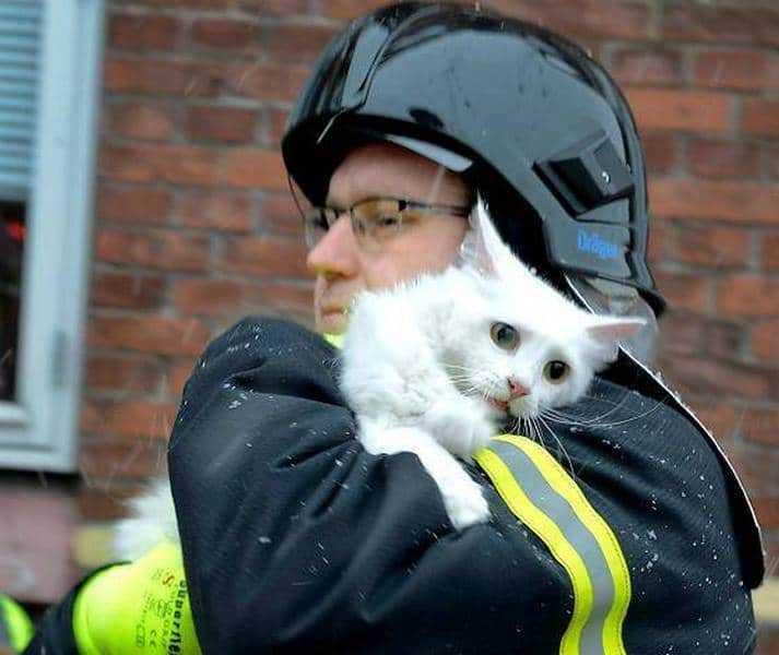 18 kép tűzoltókról akik állatok életét mentik meg 7