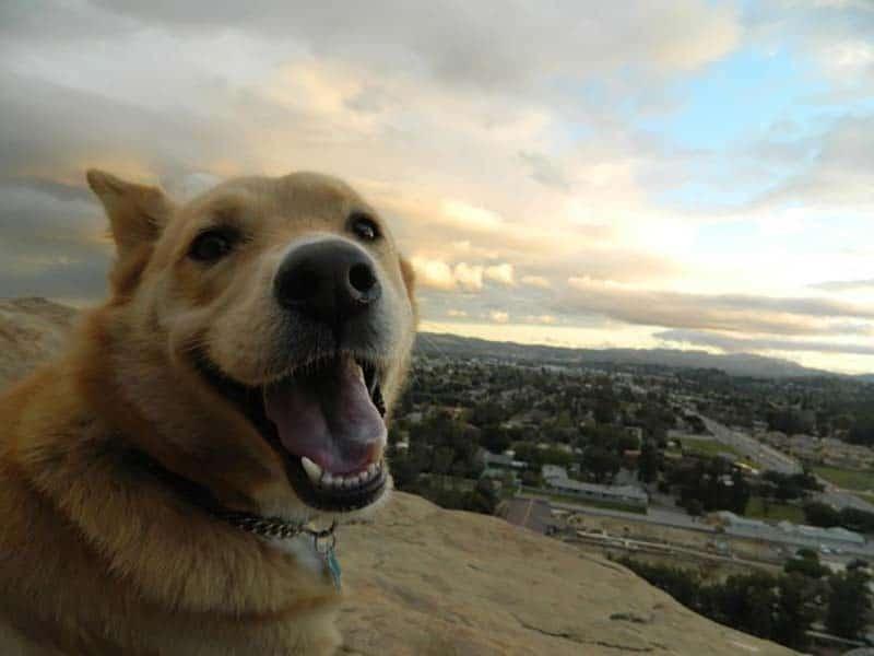 23 boldog kutya16