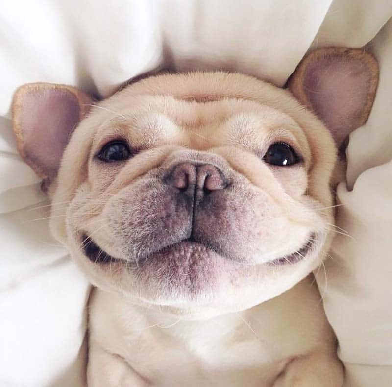 23 boldog kutya8
