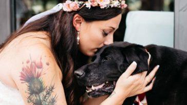 A halálos beteg kutya elkíséri gazdáját az esküvőjére4