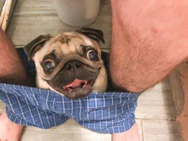 Ezért kísér el kutyád a toalettre1