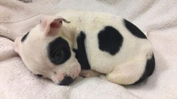 Lemondtak a rendellenességgel született kiskutyáról.