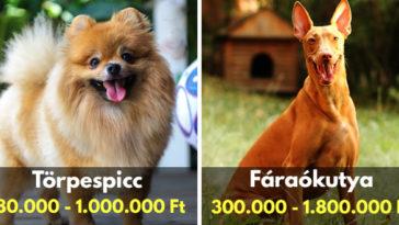drága kutyák