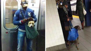 kutyák a metrón