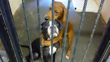 kutyákat örökbe fogadták2