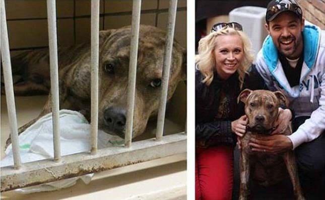 megmentett kutyák10