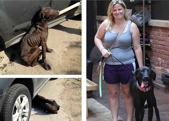 megmentett kutyák12
