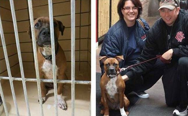 megmentett kutyák13