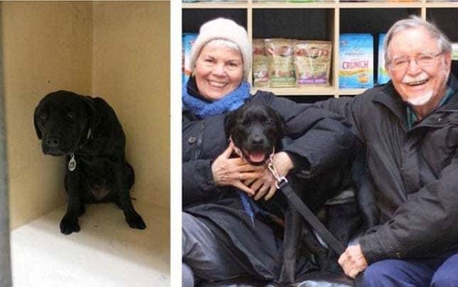 megmentett kutyák14