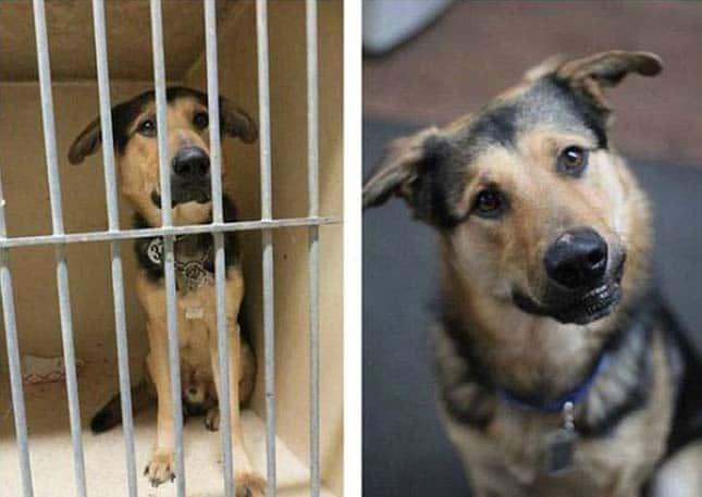 megmentett kutyák3