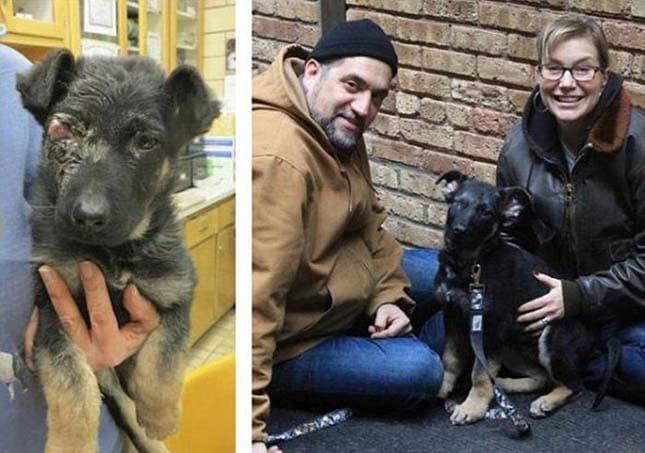 megmentett kutyák4