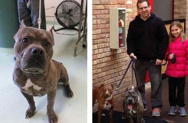 megmentett kutyák6