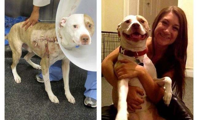 megmentett kutyák9