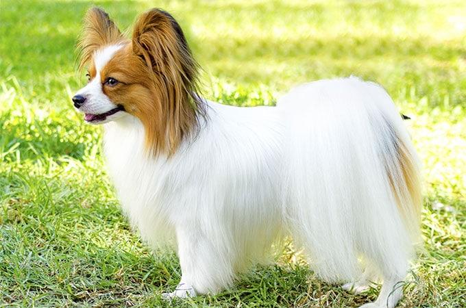 Íme a 10 legokosabb kutyafajta a világon3