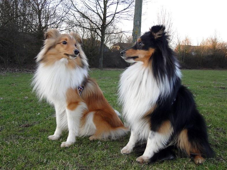 Íme a 10 legokosabb kutyafajta a világon5