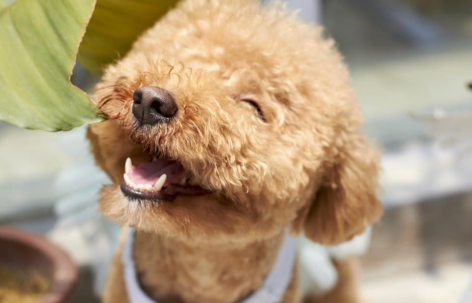 Íme a 10 legokosabb kutyafajta a világon9