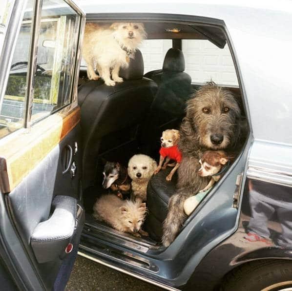 öreg kutyákat fogad örökbe, akik nem kellettek senkinek1