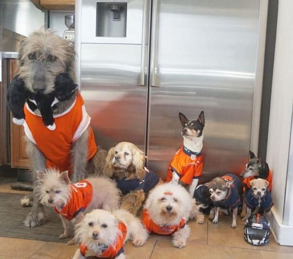 öreg kutyákat fogad örökbe, akik nem kellettek senkinek2