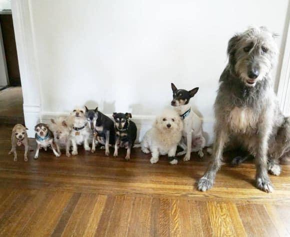 öreg kutyákat fogad örökbe, akik nem kellettek senkinek3