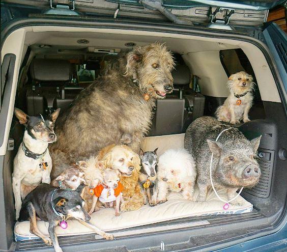öreg kutyákat fogad örökbe, akik nem kellettek senkinek4