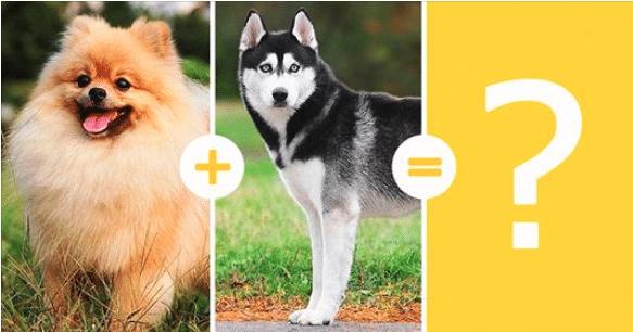 14 leírhatatlanul aranyos keverék kutya
