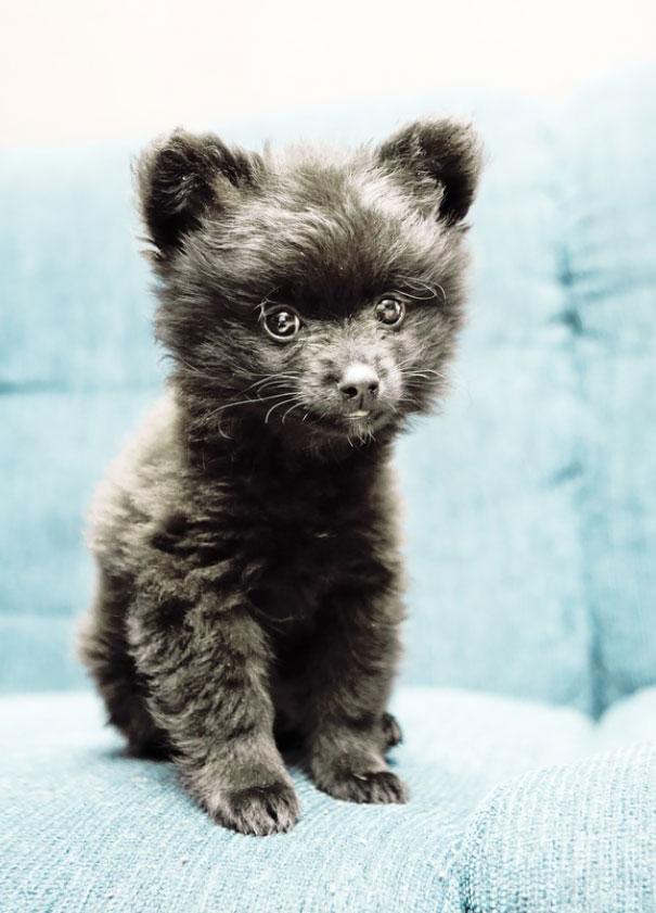 15 imádni való kutya, aki pont úgy néz ki, mint egy plüssmackó2