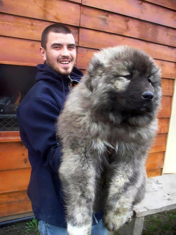 15 imádni való kutya, aki pont úgy néz ki, mint egy plüssmackó5