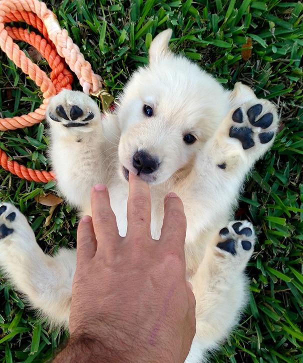 15 imádni való kutya, aki pont úgy néz ki, mint egy plüssmackó8