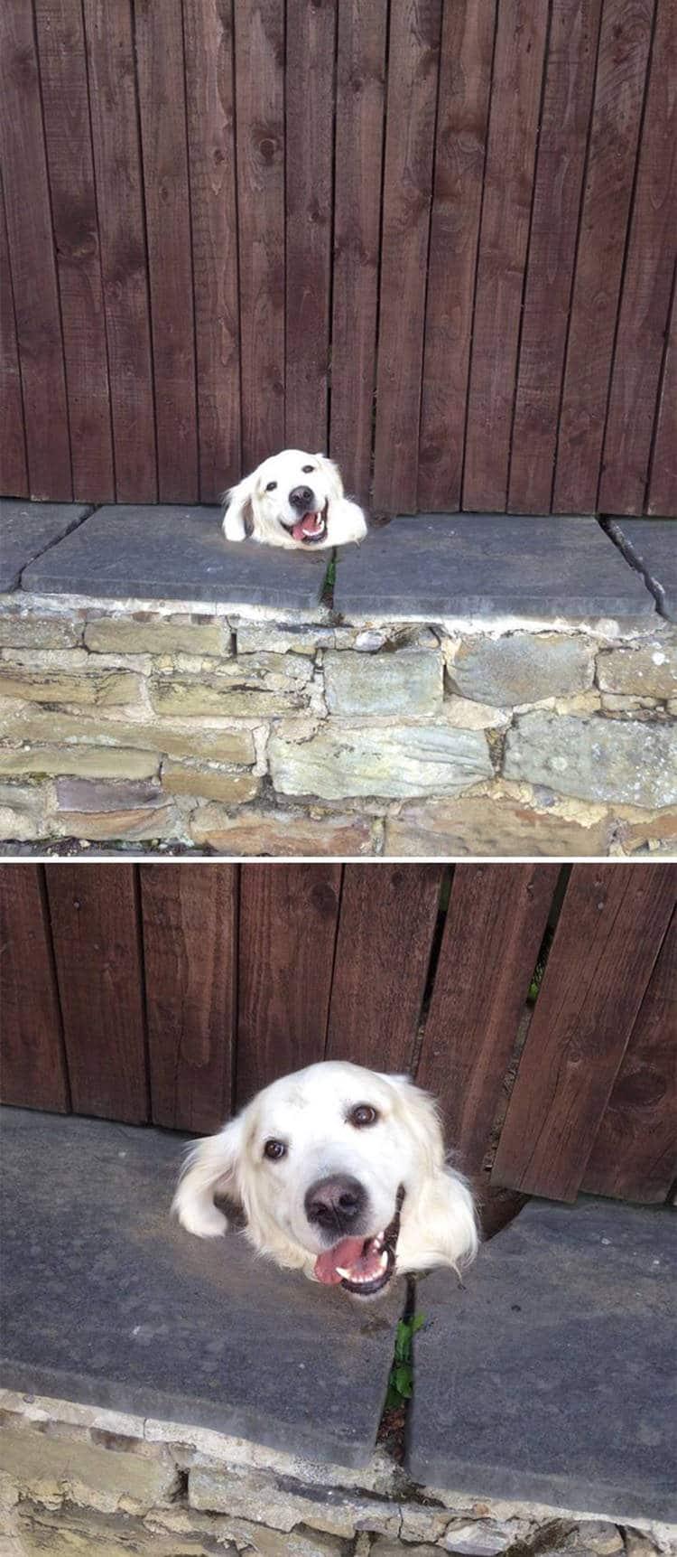 15 kíváncsi kutya, aki nagyon vicces helyzetbe került.1