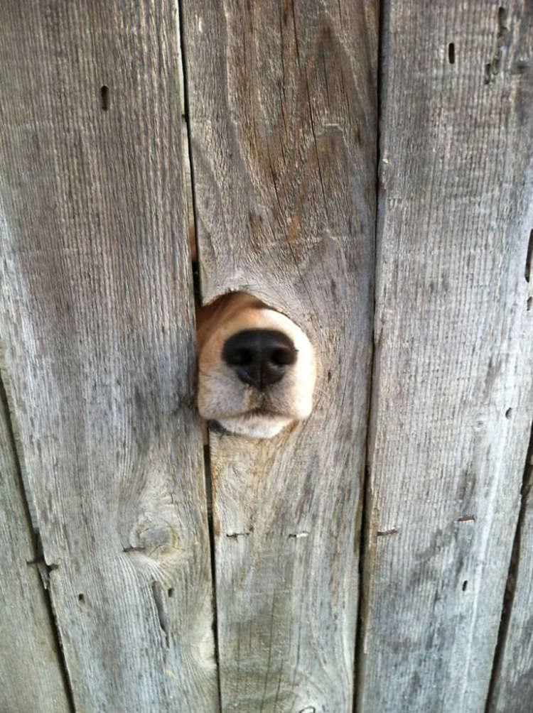 15 kíváncsi kutya, aki nagyon vicces helyzetbe került.11