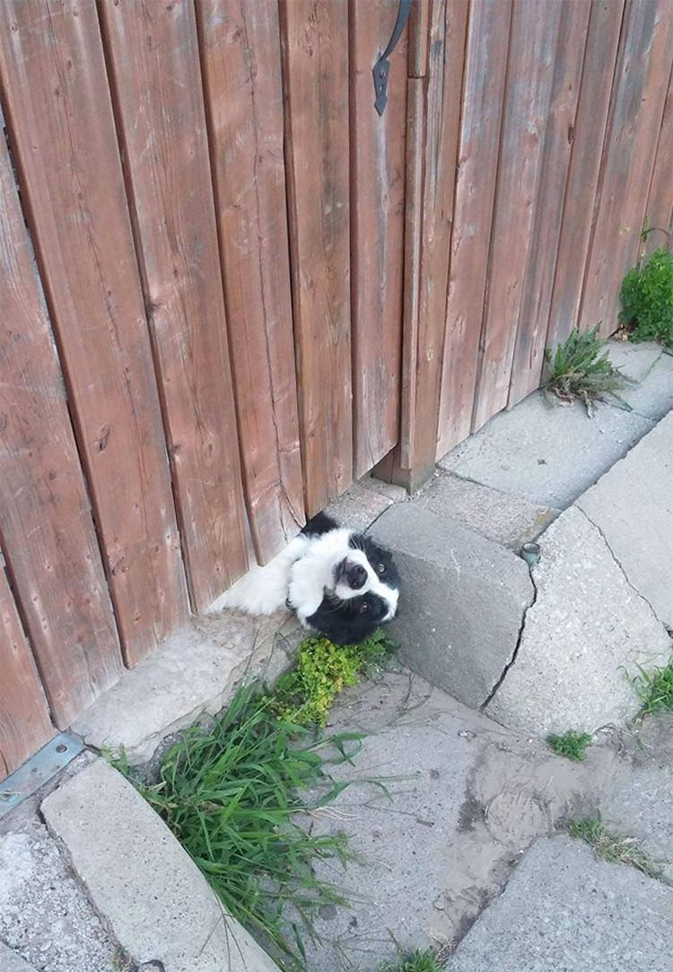 15 kíváncsi kutya, aki nagyon vicces helyzetbe került.2