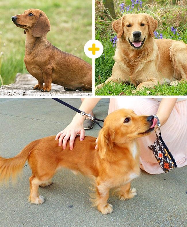 15 leírhatatlanul aranyos keverék kutya11
