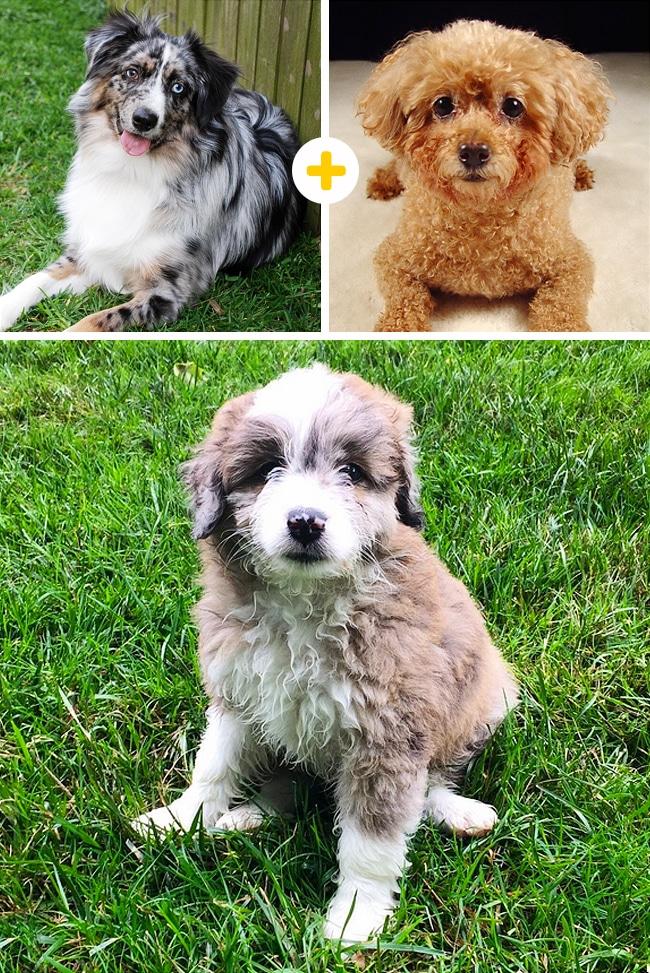 15 leírhatatlanul aranyos keverék kutya12