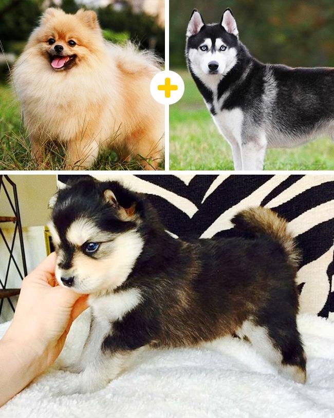 15 leírhatatlanul aranyos keverék kutya3