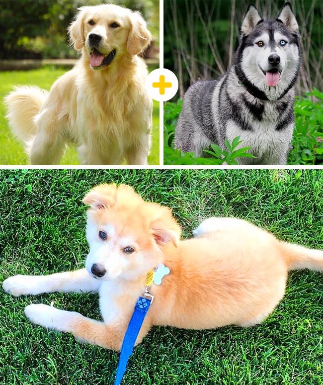15 leírhatatlanul aranyos keverék kutya5