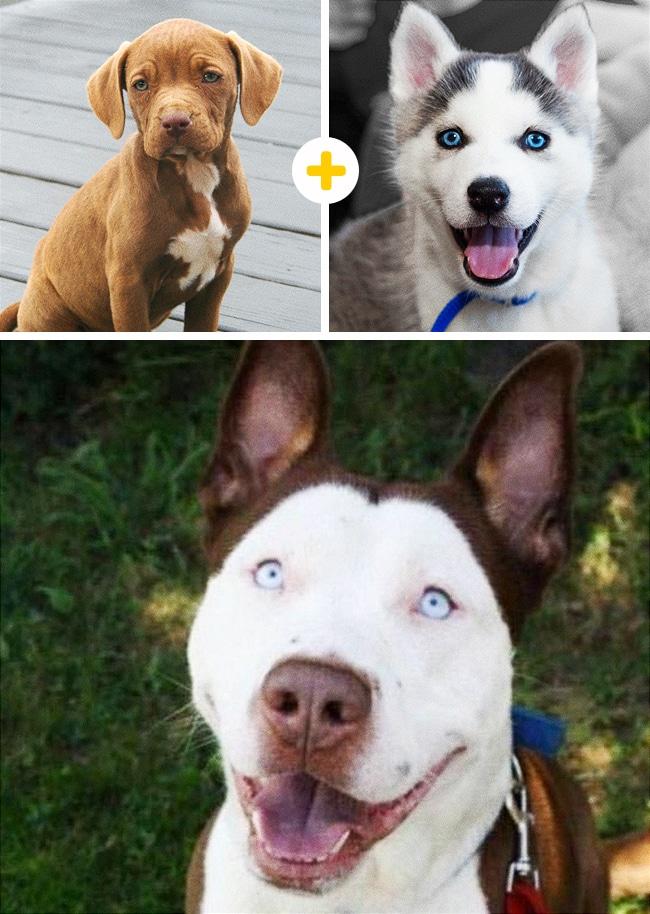 15 leírhatatlanul aranyos keverék kutya8