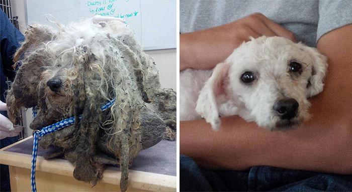 16 szívfacsaró előtte-utána kép a halál széléről mentett kutyákról1