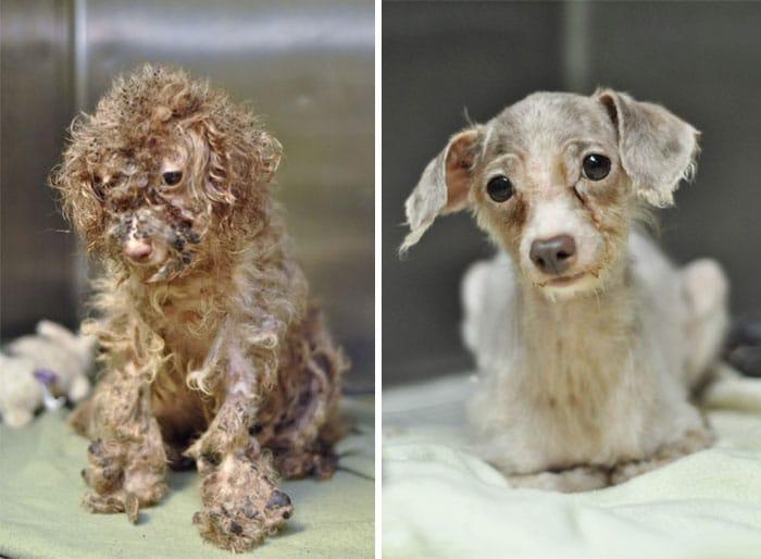 16 szívfacsaró előtte-utána kép a halál széléről mentett kutyákról10