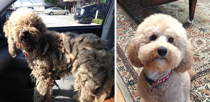 16 szívfacsaró előtte-utána kép a halál széléről mentett kutyákról12
