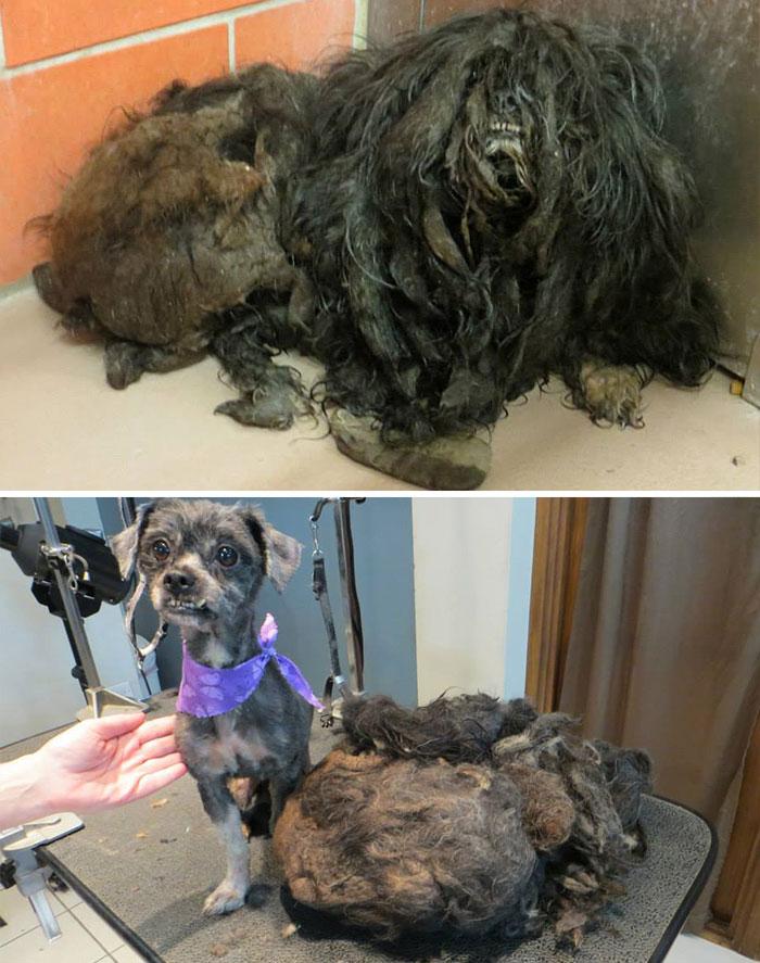16 szívfacsaró előtte-utána kép a halál széléről mentett kutyákról13