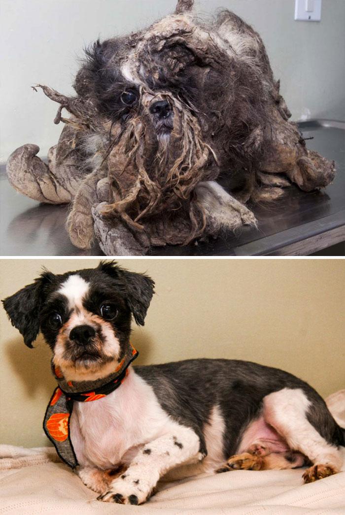 16 szívfacsaró előtte-utána kép a halál széléről mentett kutyákról16