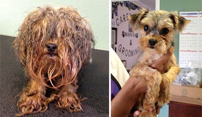 16 szívfacsaró előtte-utána kép a halál széléről mentett kutyákról6