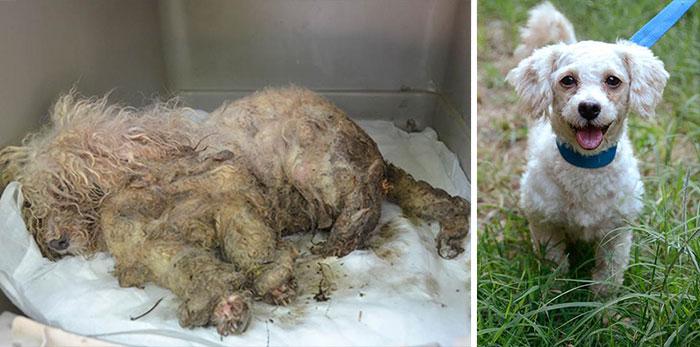 16 szívfacsaró előtte-utána kép a halál széléről mentett kutyákról8