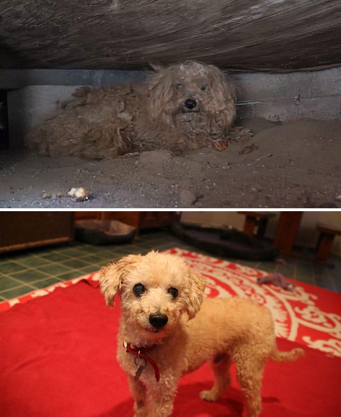 16 szívfacsaró előtte-utána kép a halál széléről mentett kutyákról9