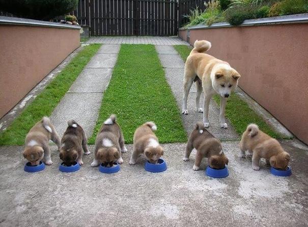 18 hihetetlenül boldog kutyaszülő a kicsinyeivel10