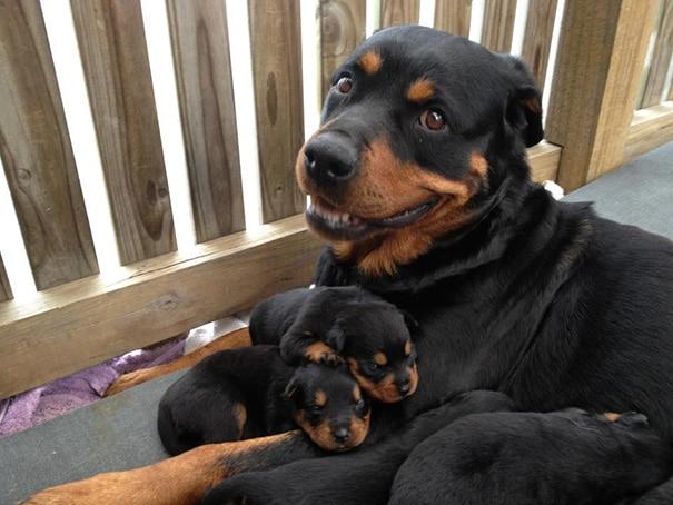 18 hihetetlenül boldog kutyaszülő a kicsinyeivel12
