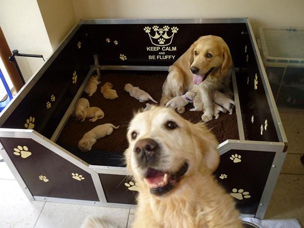 18 hihetetlenül boldog kutyaszülő a kicsinyeivel13