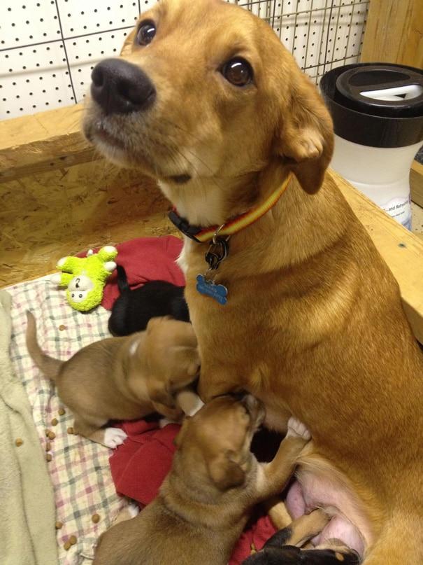 18 hihetetlenül boldog kutyaszülő a kicsinyeivel15