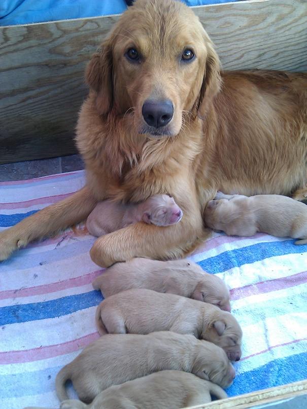 18 hihetetlenül boldog kutyaszülő a kicsinyeivel16